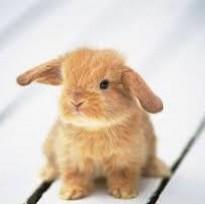 zajaczekasia