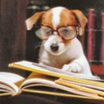 TheReadingDog