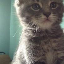 kittensandbooks