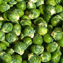 groentjeinhetnederlands