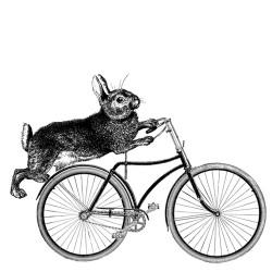 thebicyclingbunny