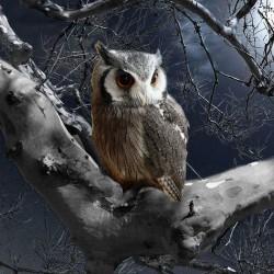 moonlightreader