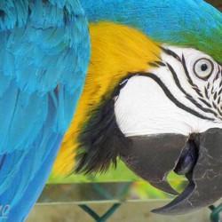 BirdMamasBooks