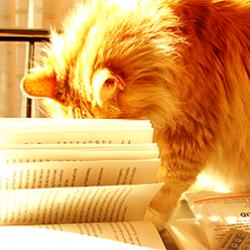 bookishkat