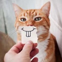 thorcat