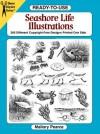 Ready-to-Use Seashore Life Illustrations - Mallory Pearce