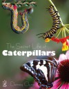 The Secret Life of Caterpillars - Densey Clyne