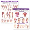 CHART: Trigger Point Chart Set: Torso and Extremities - NOT A BOOK