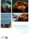 Sea Otter Lesson Plan Grade 6-8 - Lunchbox Lessons