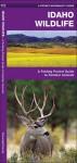 Idaho Wildlife: A Folding Pocket Guide to Familiar Species - James Kavanagh, Raymond Leung
