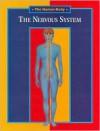 The Nervous System - Andreu Llamas