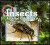 Insects Around the House - Dorothy M. Souza