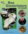 Boa Constrictors Up Close - Carmen Bredeson