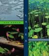 Lakes - Aaron Frisch