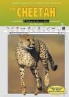 The Cheetah - Lisa Harkrader
