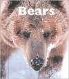 Bears - Patrick Merrick