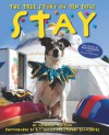 Stay: The True Story of Ten Dogs - Michaela Muntean, K.C. Bailey, Steve Kazmierski