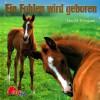 Ein Fohlen wird geboren - Elin M. Ellingsen, Gabriele Zigldrum