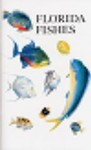 Florida Fishes - Rube Allyn