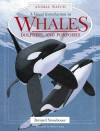 A Visual Introduction to Whales, Dolphins, and Porpoises - Bernard Stonehouse
