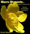 Macro Moments V1 - David Wayne