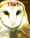 Owls - Tom Warhol
