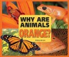 Why Are Animals Orange? - Melissa Stewart