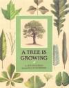 A Tree is Growing - Arthur Dorros