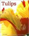 Tulips - Liz Dobbs