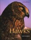 Hawks - Tom Warhol