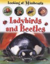 Ladybirds And Beetles (Looking At Minibeasts) - Sally Morgan