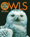 Owls - Fern G. Brown