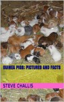 Guinea Pigs; Pictures and Facts - Steve Challis