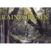 Rainforests (Panoramic Vision) - Patrick Hook