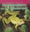 Animales de la Charca = Animals at the Pond - Elisabeth Lambilly-bresson