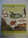 Amphibians and Reptiles (Science Nature Guides) - Christiane Gunzi, Alan Male