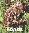 Toads - Patrick Merrick