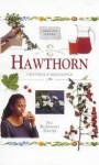 In a Nutshell: Hawthorn - Jill Rosemary Davies