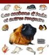 Les Cochons D'Inde Et Autres Rongeurs = Guinea Pigs and Other Rodents - Bobbie Kalman, Reagan Miller