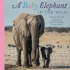 A Baby Elephant in the Wild - Caitlin O'Connell