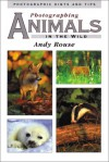 Photographing Animals In The Wild - Andy Rouse