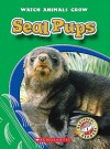 Seal Pups - Colleen Sexton