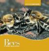 Bees - Judith Jango-Cohen