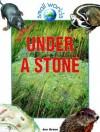 Under a Stone - Jen Green