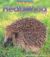 Hedgehog - Louise Spilsbury, Richard Spilsbury