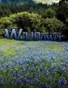 Wildflower - Marie Carroll