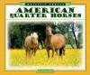 American Quarter Horses - Pamela Dell