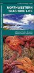 Northwestern Seashore Life: A Folding Pocket Guide to Familiar Plants & Animals - James Kavanagh, Raymond Leung