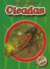 Cicadas - Colleen Sexton