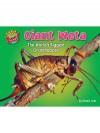 Giant Weta: The World's Biggest Grasshopper - Natalie Lunis